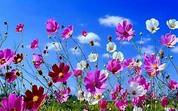 Fuga di primavera in Puglia